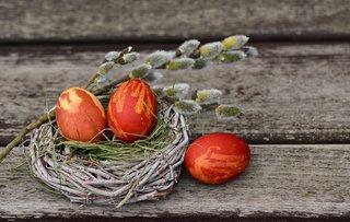 Oul roșu | Credit foto: congerdesign | Sursa: pixabay