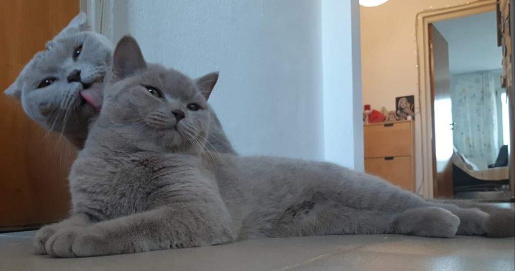 Pisică răsfățată