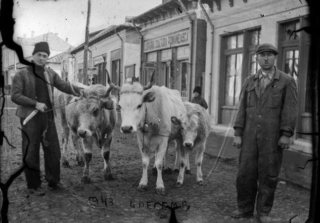 Pe uliță în Slobozia, în zi de decembrie | Fotografie: Costică Acsinte