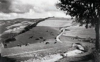 Pășune | Fotografie: Iosif Berman; Arhivă: Muzeul Țăranului Român