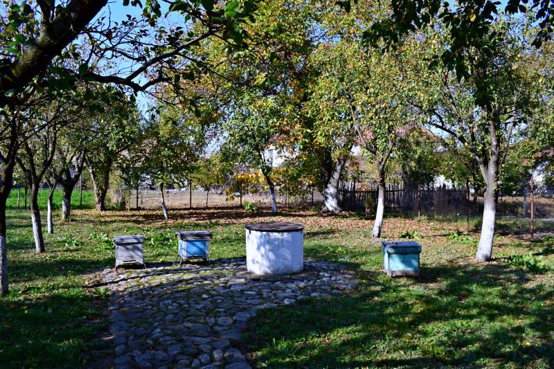Grădina casei. Astăzi a rămas o grădină micuță, însă, în vremea lui Blaga, grădină dădea până în șoseaua principală. Unii dintre proprietari au vândut o jumătate de grădină și a rămas o grădina mai mică. Acum este o livadă cu meri și pruni, un nuc și, uneori, au loc acolo diferite evenimente culturale. | Credit foto: Mira Kaliani