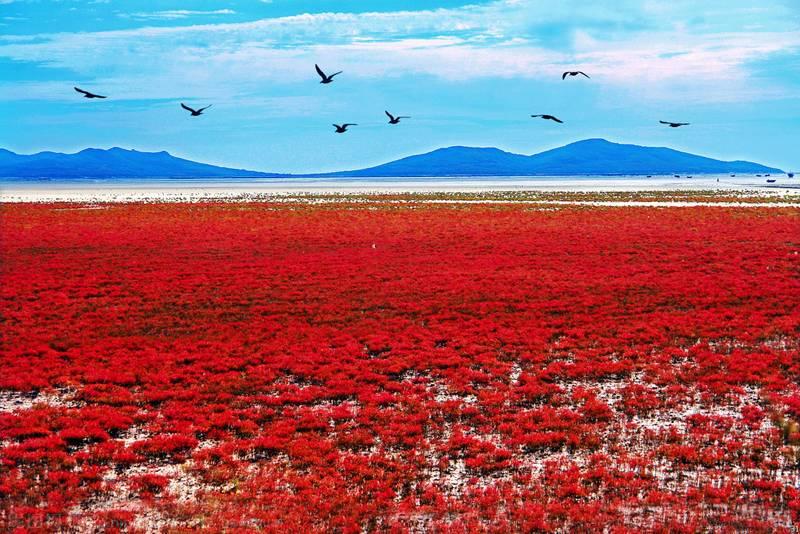 Plaja Panjin, China | Sursa: Absolute China Tours