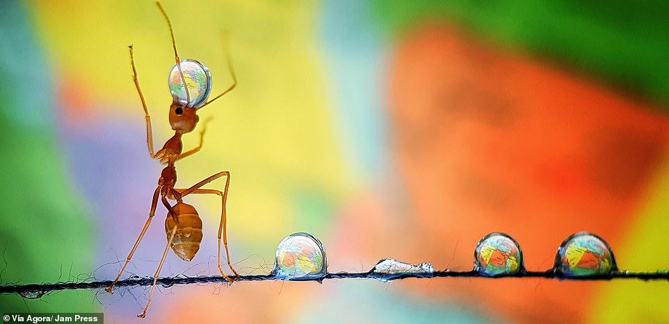 """""""Furnica ce ține pământul Pământul în echilibru"""" , fotografie de Analiza De Guzman / AGORA Images"""