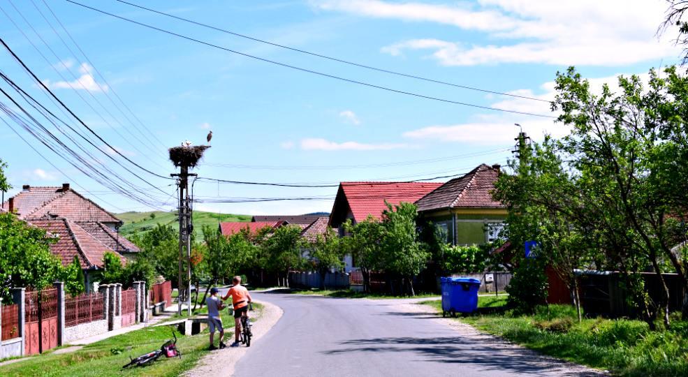 Berze în Sic, Cluj / Foto: Mira Kaliani